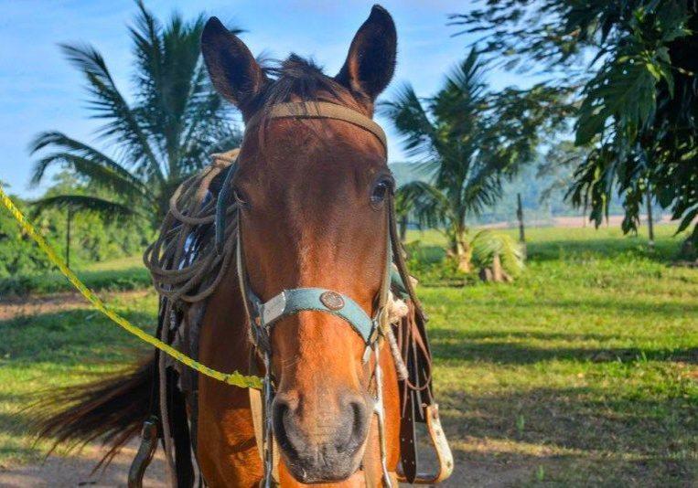 Horseback Riding - Belize