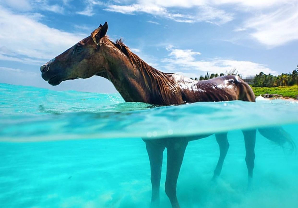 HorsebackRiding Bahamas
