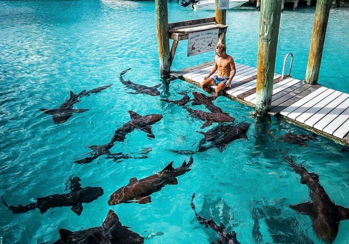 Nurse Sharks - Bahamas