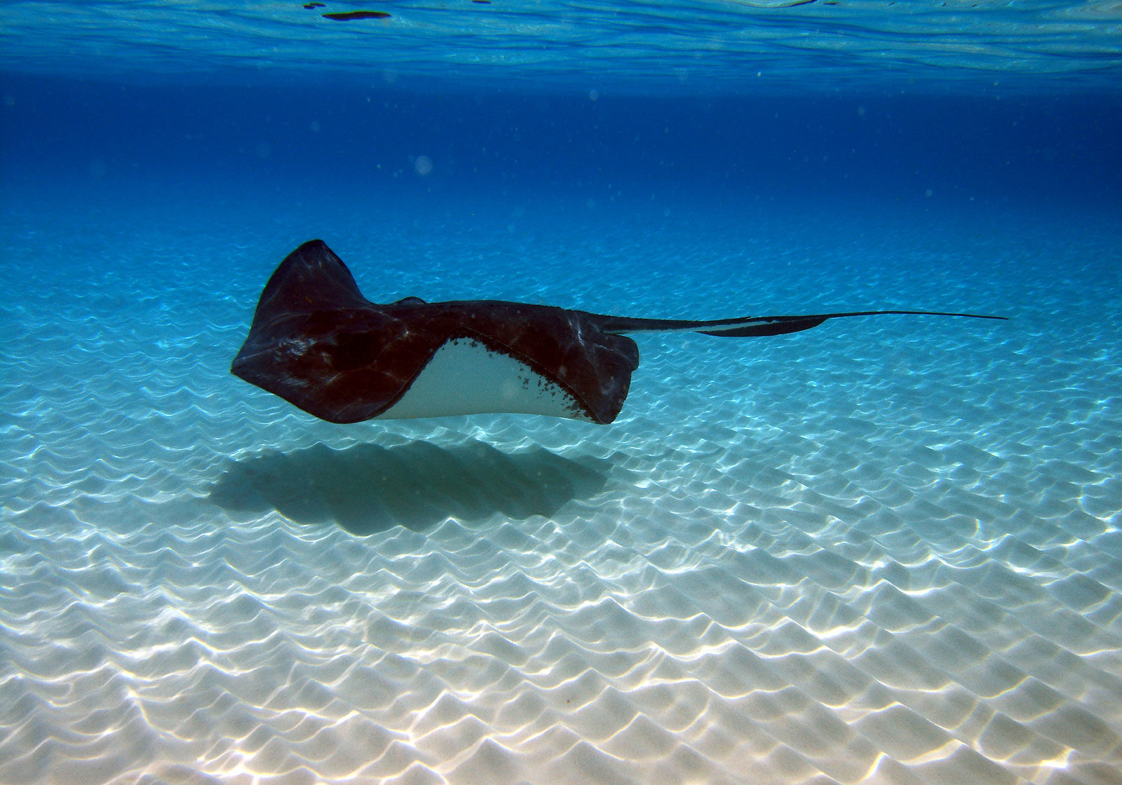 Snorkel with the stingrays - Bahamas