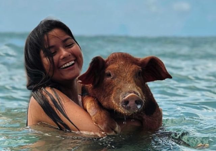 The Swimming Pigs - bahamas