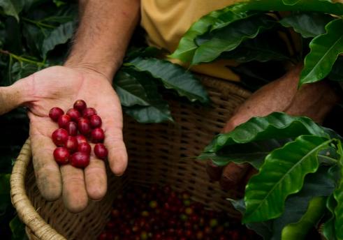 Tour A Coffee Plantation - Colombia